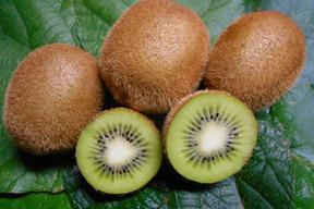 農薬・化学肥料不使用キウイフルーツ 18玉