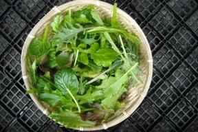 【無農薬栽培】ベビーリーフ(500g)