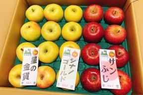 【家庭用】りんご詰め合わせ 10kg (32~40個)