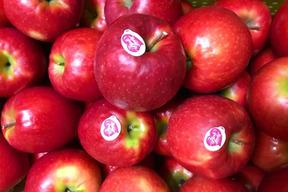 【幻の林檎】ピンクレディ酸味の最高クラス 3キロ箱