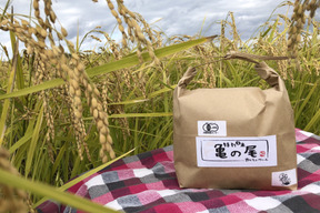 有機栽培亀の尾2kg(玄米)
