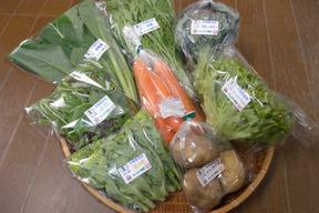 季節の有機野菜セット<ライト>