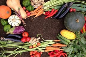 なごみ農園の有氣野菜セット(10品)