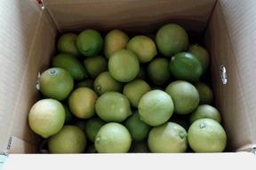 【有機JAS】レモン(2kg)