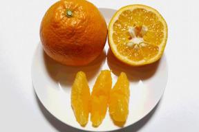 【有機JAS】愛媛が誇る柑橘!伊予柑 加工用(4kg)