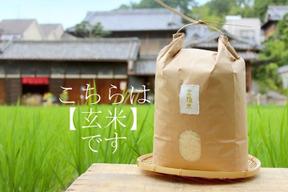 【金鵄米/玄米】冷めても美味しいヒノヒカリ きんしまい(2kg)