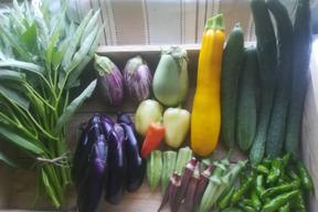 旬の自然農法野菜セットLサイズ