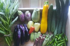 旬の自然農法野菜と自然栽培味噌セット