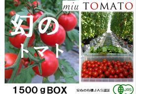 幻の赤い宝石【飯田農園】miuトマト1500gパック