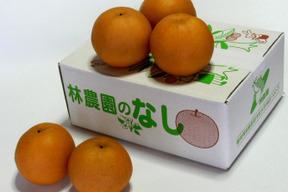 豊水梨(家庭用)約2.5kg(6〜7玉)
