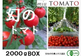 幻の赤い宝石【飯田農園】miuトマト2000gパック