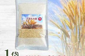 お試し250g もち麦 キラリモチ 希少品種 愛知県産 令和元年産 農薬・化学肥料不使用