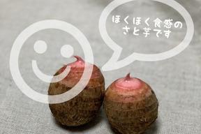 ホクホク美味しい赤芽の里芋 1.6kg