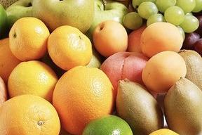 ☆畑直送☆畑で採れた果物をプレゼント‼️こだわり有機栽培野菜10品セット