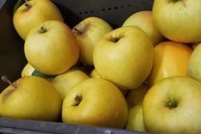 旬です❗酸味が人気のシナノゴールド  家庭用3kg