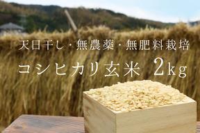 《新米令和元年産、予約》コシヒカリ玄米2kg【無農薬・無肥料 生命力溢れる】
