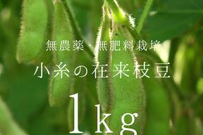小糸の在来枝豆(枝付き)1kg【無農薬・無肥料】