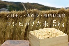 《新米令和元年産、予約》コシヒカリ玄米5kg【無農薬・無肥料 生命力溢れる】