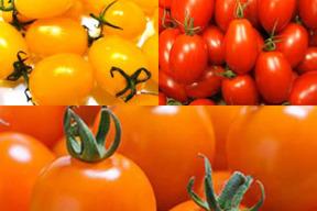 ハウス ミニトマト(アイコ)土壌栽培レッド&イエロー2品目3キロセット