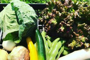 にんにく1kg+野菜8品セット
