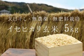 《新米令和元年産、予約》イセヒカリ玄米5kg【無農薬・無肥料 生命力溢れる】