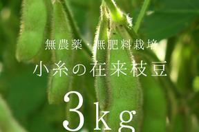 小糸の在来枝豆(枝付き)3kg【無農薬・無肥料】