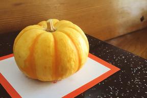 手のひらサイズの可愛いかぼちゃ*プッチィーニ5個セット