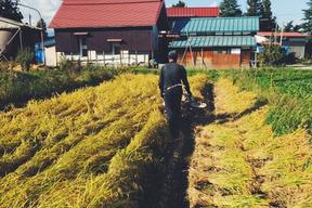 《つや姫》【新米 令和元年収穫】【玄米 5kg】山形県飯豊町産 特別栽培米