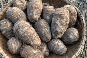自然栽培の里芋2kg
