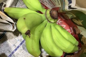 10/21〜3日間限定商品!〔自然栽培〕島バナナ2房