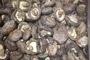 有機原木乾椎茸(どんこ500g)