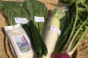 季節の野菜セット 京の豆っこ米3合袋付き