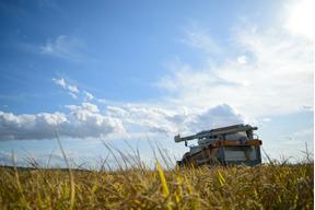 無化学肥料・精米タンパク6.8%以下のゆめぴりか