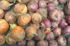 無農薬*ジャンボ・ニンニク500g&玉ねぎ/赤玉ねぎ計3kg