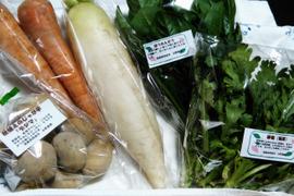 旬のお野菜詰め合わせBOX Sサイズ/基本の5品目