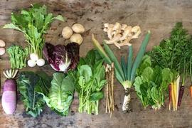 【高知県・中里自然農園】無農薬/お野菜詰め合わせBOX(Lサイズ・約20パック)