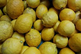 【尾道】農薬不使用レモン B品 3kg