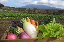 【富士山の恵み】厳選*季節野菜セット(8品)