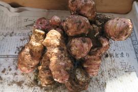 【無肥料・無農薬栽培】ほっこりな紫菊芋(500g)