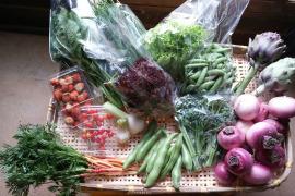 旬の野菜詰め合わせ(5〜6品)お試し用