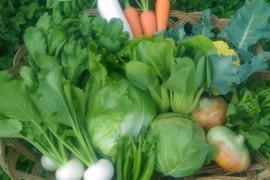 旬のおかやま有機無農薬認証野菜セット (6~9種類)