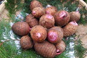 ホクホク美味しい赤芽の里芋 3kgと親芋のオマケ付き