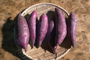 自然栽培のさつまいも(ベニハルカ)2kg(約6~8本入り)