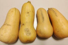 急遽【訳あり増量】傷・割れバターナッツかぼちゃ*1.5㎏ 農薬・化学肥料不使用