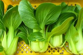 無農薬*チンゲン菜2kg