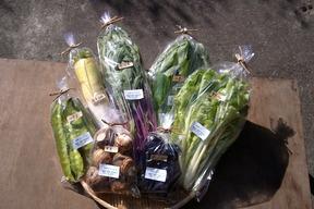旬の自然栽培野菜詰め合わせ お試しセット