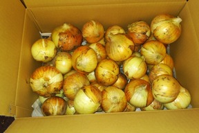 玉葱10kg