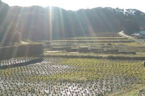 年に一度の玄米餅+やさい詰め合わせ(耕さない、いつも緑の畑より)肥料農薬不使用、種取り