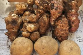 【肥料・農薬不使用栽培】カラダに優しい冬の根菜セット(2kg)