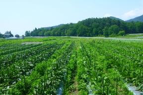 夏だ!祭りだ!パワフル野菜セット8品目/農薬/化学肥料・不使用
